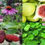 18 Tanaman Herbal Pencegah Covid-19
