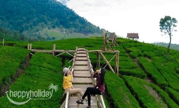 Kebun teh Paket Wisata Liburan Tour Pangalengan